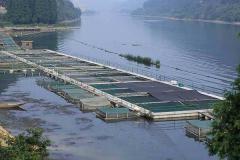 小型水库养鱼的高产技术