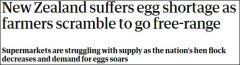 新西兰出现鸡蛋荒,因为