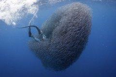 震撼!自由潜水员出海追