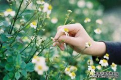 花是浇死的,人是气死的