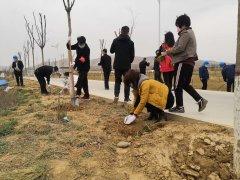 陕西 蒲城:石窝栽树