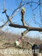 苹果树3月的管理