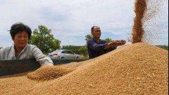 小麦价格持续上涨!