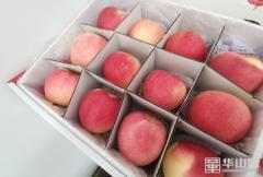 """白水县:白水苹果卖上""""天""""了!"""