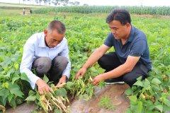陕西定边县订单农