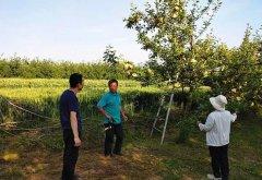 渭南临渭区果农需积极做好果树幼果期病虫防治
